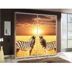 PENELOPA 205 Zebras 2